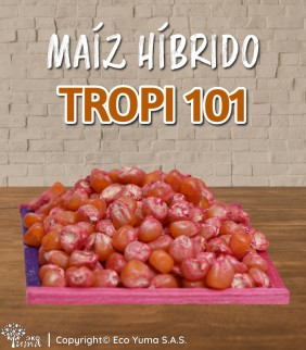 Maíz Híbrido Tropi-101 -...