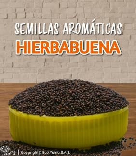 Hierbabuena - Semillas