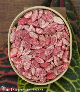 Calabacín Cocozelle - Semillas