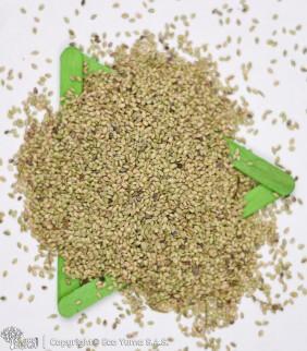 Grama Bahia Grass O Macana...
